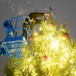 THE FERRIS HOLIDAY NIGHT CELEBRATION INCLUDED A TREE LIGHTING. . .