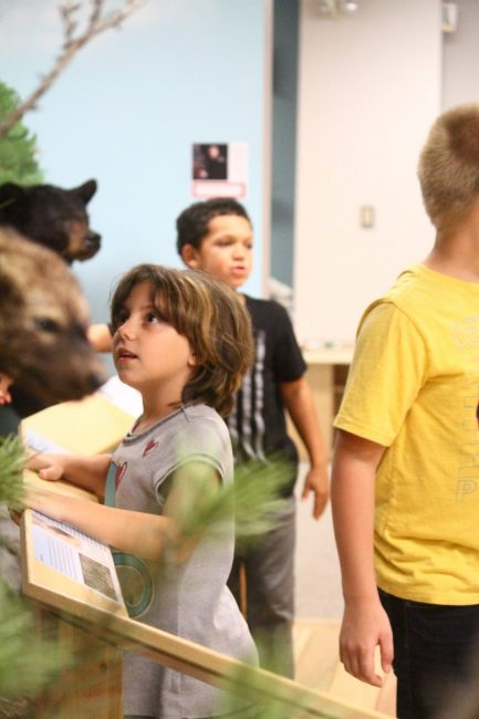 A student from Brookside Elementary School looks at the animal exhibits in Card Wildlife                                        Education Center.